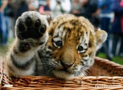 animals giving high five
